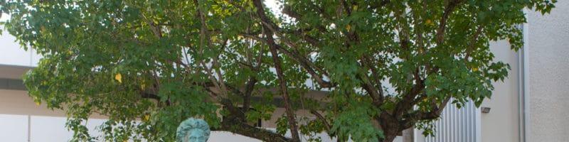 CECISO le exige renuncia a Decana Interina de Ciencias Sociales