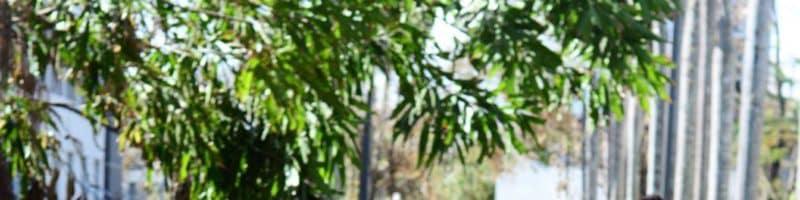 Exitosa la limpieza de la UPR en Río Piedras
