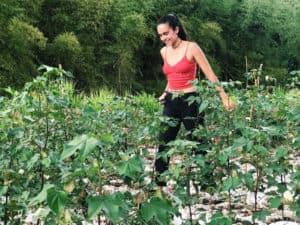 UPR Utuado gradúa a la primera clase de Agricultura Sustentable